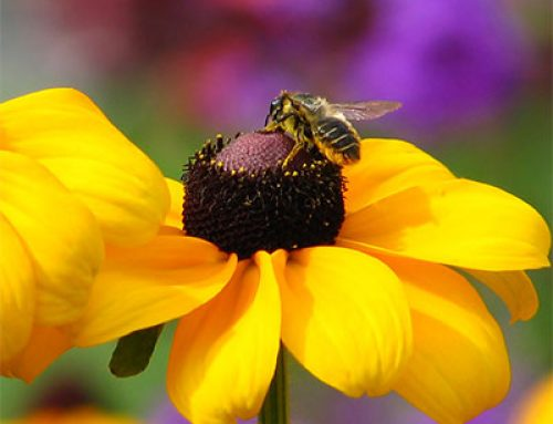 Delaware unveils final bee protection plan